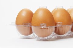 Fresh eggs in plastic tray Stock Image