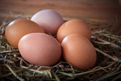 Fresh eggs on rice straw with brown wood background Stock Images