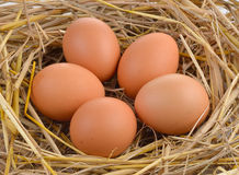 Fresh eggs on rice straw. Royalty Free Stock Photography