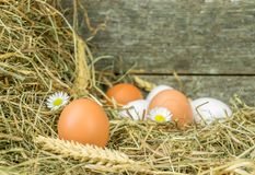 Fresh eggs in straw Stock Images