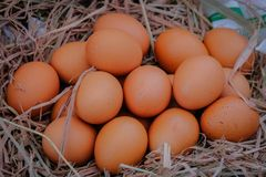 Fresh eggs on straw. In the market royalty free stock photo