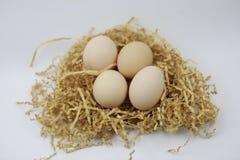 Fresh Eggs on of straw Stock Photos