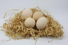 Fresh Eggs on of straw Stock Image