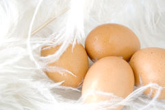 Fresh eggs on white Stock Photo