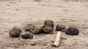 Fresh Elephant poop. A Fresh pile of Elephant poop Royalty Free Stock Images