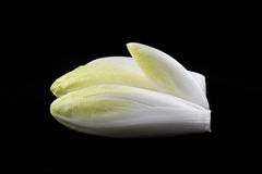 Fresh endives Royalty Free Stock Photo