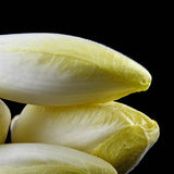 Fresh endives Stock Image