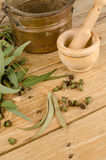 Fresh eucalyptus stock images