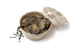 Fresh European flat oysters in a basket Royalty Free Stock Photography