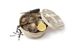 Fresh European flat oysters in a basket Royalty Free Stock Photos