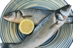 Fresh european seabass Royalty Free Stock Image