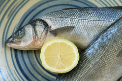 Fresh european seabass Royalty Free Stock Photography