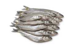 Fresh European smelt fishes Royalty Free Stock Photo