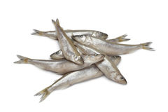 Fresh European smelt fishes Royalty Free Stock Images