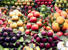 Fresh exotic fruits in the market Royalty Free Stock Photo