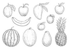Fresh exotic fruits sketch vector  icons Stock Photos
