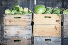 Fresh Fall Gourds and Crates in Rustic Fall Setting Stock Photos