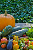 Fresh Fall Veggies Stock Photos
