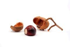 Fresh fallen chestnut Royalty Free Stock Photos