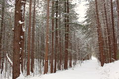 A snowy path in the woods Stock Photos