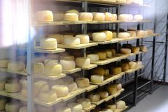 Cheese heads on factory getting ready to hit the shelves Stock Photography