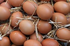 Fresh farm chicken eggs on hay nest. Closeup of a basket full of brown eggs in a rustic farmhouse like setting. Horizontal format with shallow depth of field stock photos