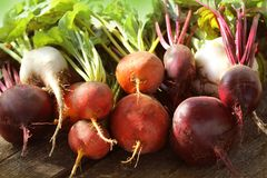 Fresh farm colorful beetroot on a wooden background. Detox and health. Selective focus. Red, golden, white beet.  Stock Images