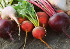 Fresh farm colorful beetroot on a wooden background. Detox and health. Selective focus. Red, golden, white beet.  Stock Photos