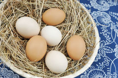 Fresh farm eggs Stock Photos
