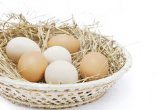 Fresh farm eggs. In scuttle with hay Stock Image