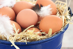 Fresh farm eggs Royalty Free Stock Image