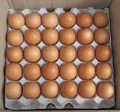 Fresh Farm Eggs Royalty Free Stock Photo