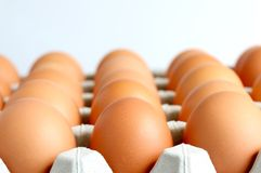 Fresh Farm Eggs On The Tray. The close up shot of some fresh farm eggs on the tray Stock Images