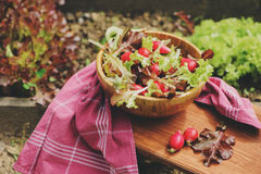 Fresh farm home growth reddish and green salad in wooden plate Stock Image