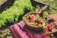 Fresh farm home growth reddish and green salad in wooden plate,  Royalty Free Stock Images