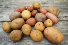 Fresh Farm Potato Stock Photos