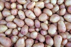 Fresh Farm Potato Stock Photography