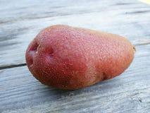 Fresh Farm Potato Royalty Free Stock Photography
