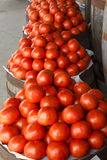 Fresh Farm Tomatoes Stock Image