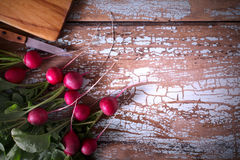 Fresh farm vegetable- radish, on wooden rustic background Stock Images