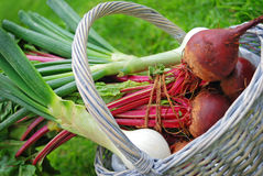 Fresh farm vegetables. Onions and beetroot in a basket Royalty Free Stock Images