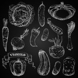 Fresh farm vegetables chalk sketches set Stock Images