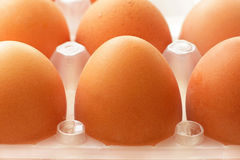 Fresh farmers raw eggs in tray closeup. Fresh raw eggs in the tray Royalty Free Stock Photo