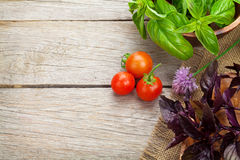 Fresh farmers tomatoes and basil. On wood table with copy space Royalty Free Stock Photos