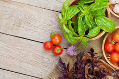 Fresh farmers tomatoes and basil on wood table. View from above with copy space Royalty Free Stock Photos