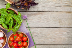 Fresh farmers tomatoes and basil on wood table. View from above with copy space Stock Photography