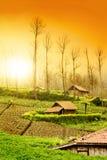 Fresh Farmland Sunrise Royalty Free Stock Images