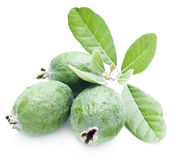 Fresh feijoa. Fresh New Zealand feijoa fruit with leaves isolated on white stock images