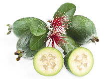 Fresh feijoa. Fresh New Zealand feijoa fruit with leaves and flowers isolated on white stock photography