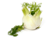 Fresh fennel Royalty Free Stock Photography